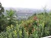 Billede taget fra paladsets have ned over Den Forbudte By, desværre er det diset i vejret så det ikke er klart