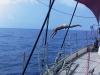 1992 01, badning under vindstille på Atlanten